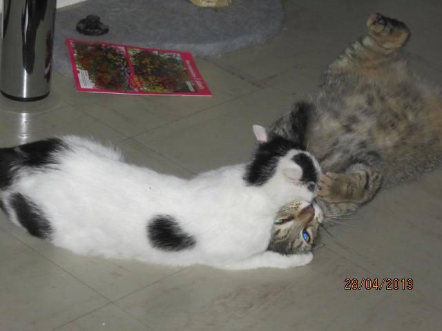Violette - blanche et noire née en 2012 94230310