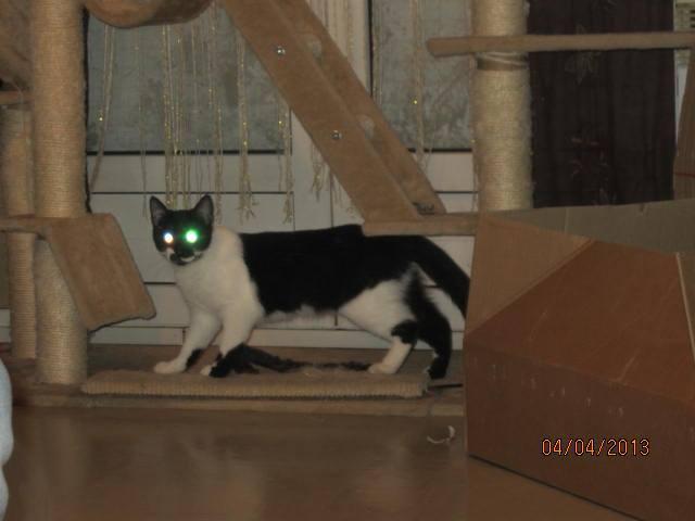 Lolita -  noire et blanche née en 2012 99351310