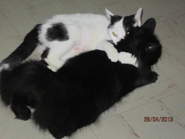 Violette - blanche et noire née en 2012 99683710