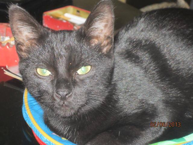 Noiraud - noir yeux verts né en 2013 99867010