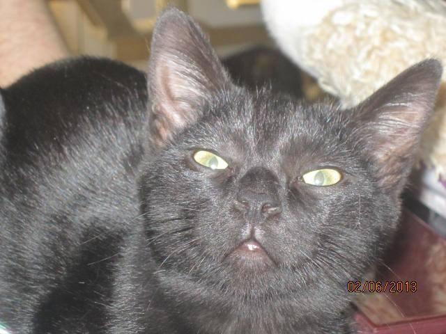 Noiraud - noir yeux verts né en 2013 99901010