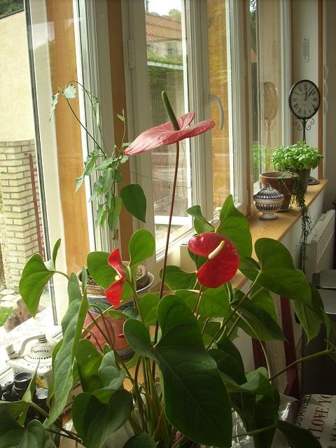 mes plantes interieurs 10210