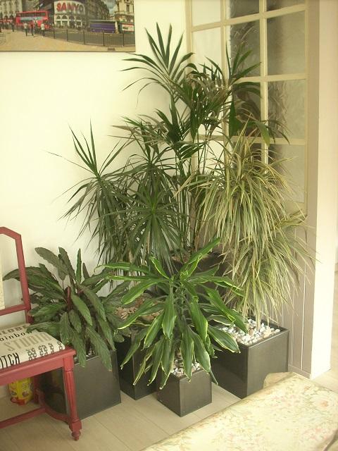 mes plantes interieurs 10610