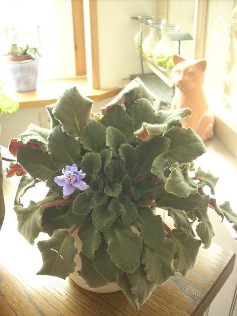 mes plantes interieurs 10710