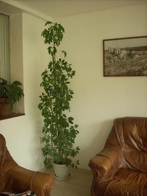 mes plantes interieurs 11010