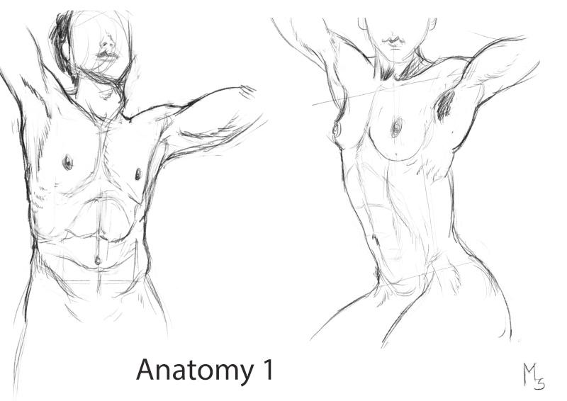 Maxtronaute [Challenge été P20] ◕‿◕ - Page 3 Anatom10