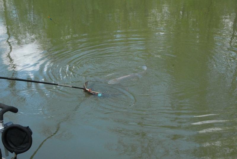 initiation pêche -18 ans à  Bussiare - Page 2 Dsc_0334