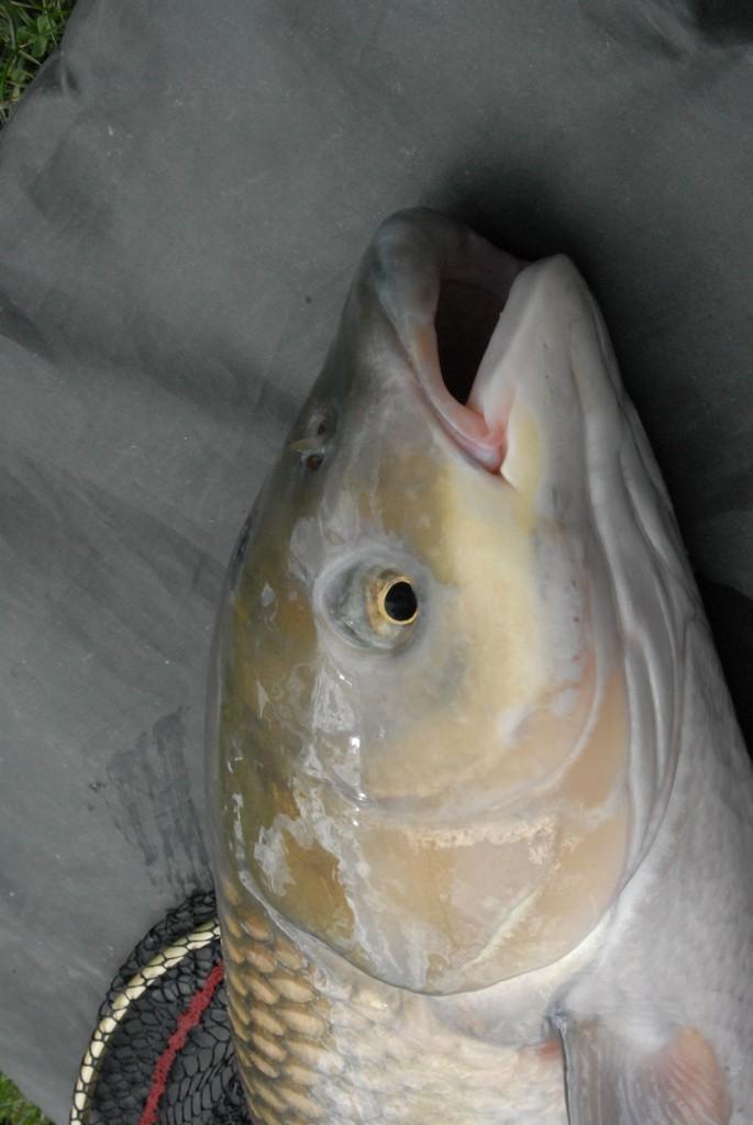 initiation pêche -18 ans à  Bussiare - Page 2 Dsc_0337
