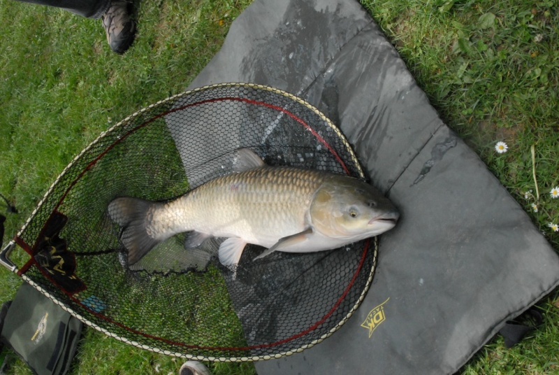 initiation pêche -18 ans à  Bussiare - Page 2 Dsc_0429
