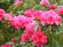 Thème du mois de Mai 2013 : Le printemps est enfin là ! Explosion de la nature Mai_2011
