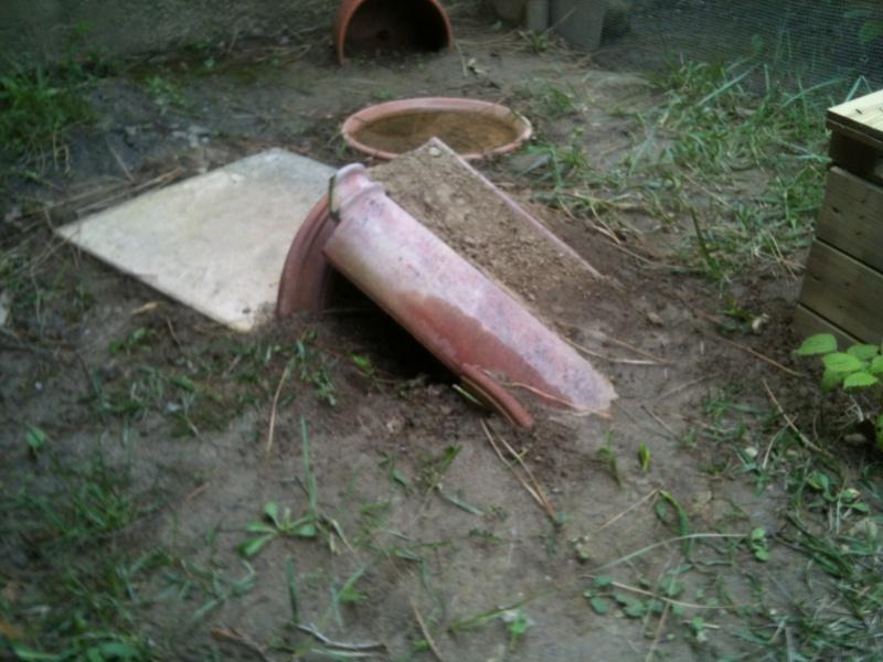 Tortues de Bébert81 Image710