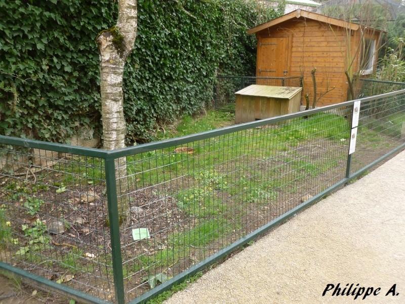 Du côté du ZooParc de Beauval (41) Tortue12