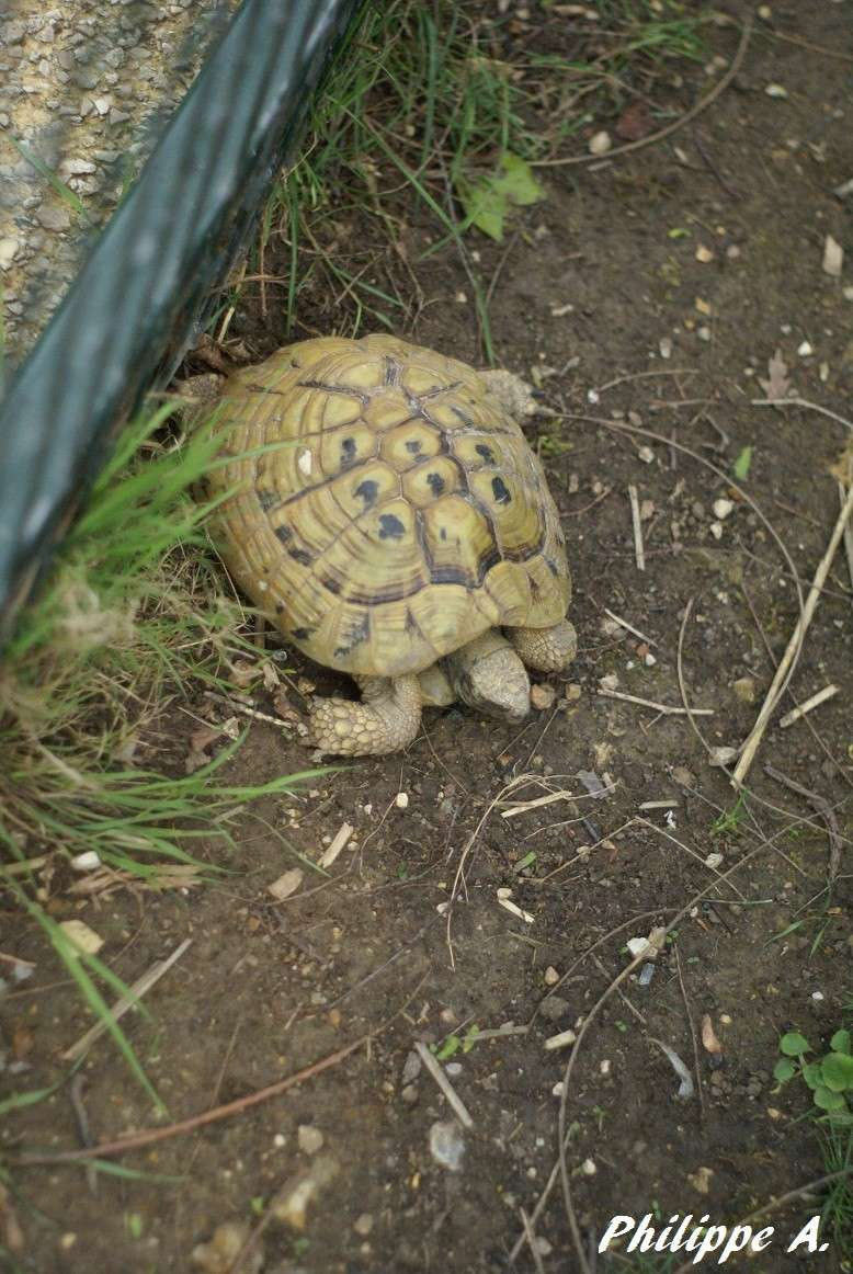 Du côté du ZooParc de Beauval (41) Tortue13