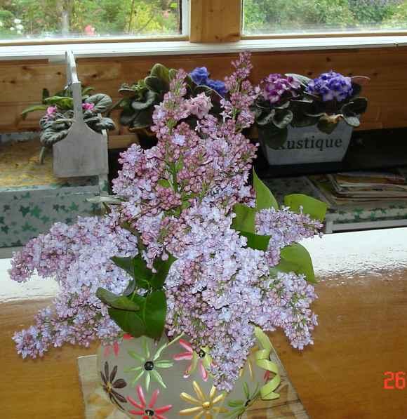 le bouquet du jour.... Dsc05420