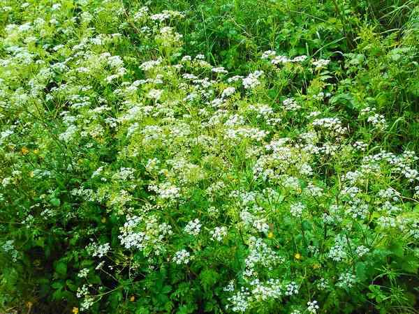 Plantes et fleurs sauvages de nos régions Img_2139