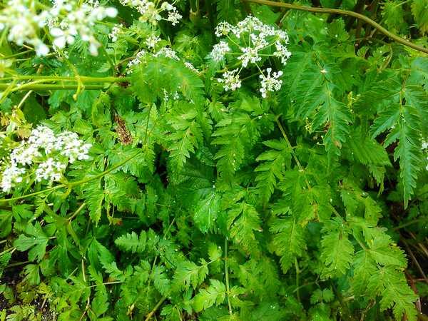 Plantes et fleurs sauvages de nos régions Img_2140