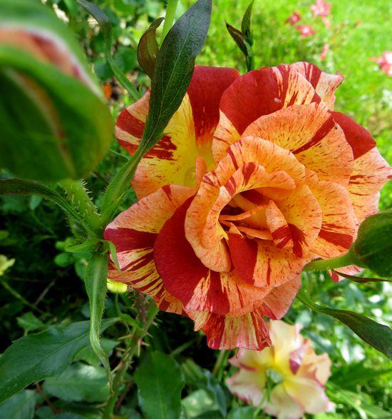 Summer lodge (Orard - 2007) Summer11