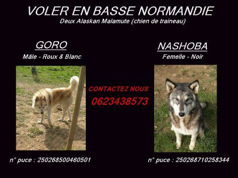 huskies volés RETROUVES 94329410