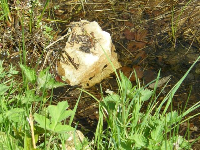 flore des sources et fontaines Tat10