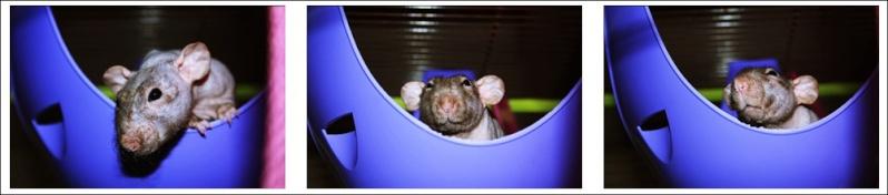 Les Hoop & Rats Cats14