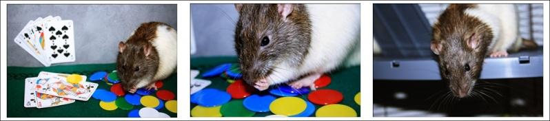 Les Hoop & Rats Cats510