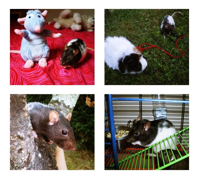 Les Hoop & Rats Ggu10