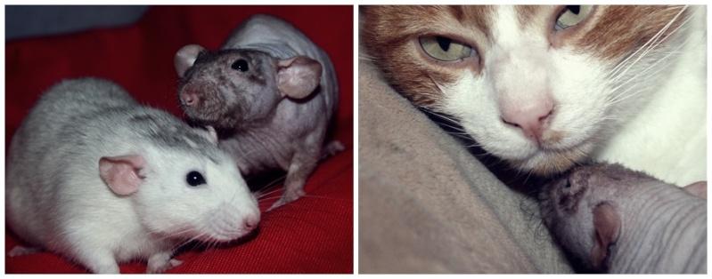 Les Hoop & Rats Hio10