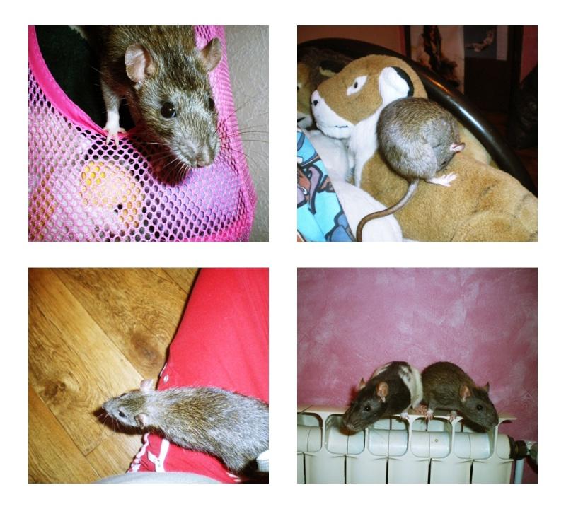 Les Hoop & Rats Huih10