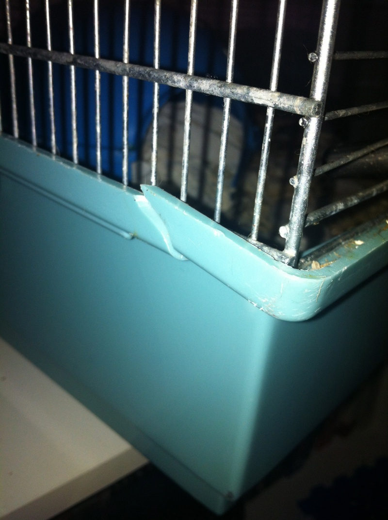 Vend cage  Img_1310