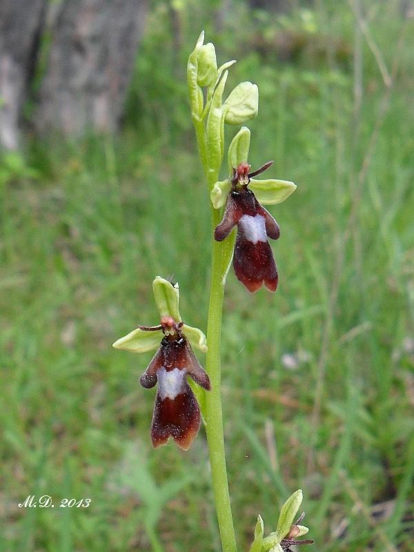 Einheimische Orchideen am Standort Orchid11
