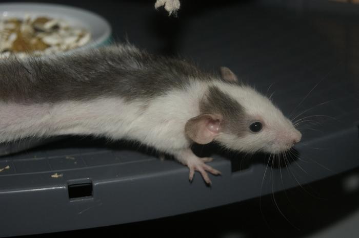 Lisa et ses 7 ratons Oscar10
