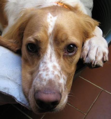 Randonner avec son chien - Page 3 Photo10