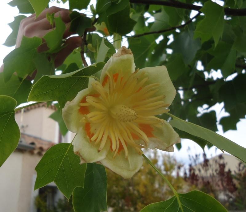 Premières floraisons 00125