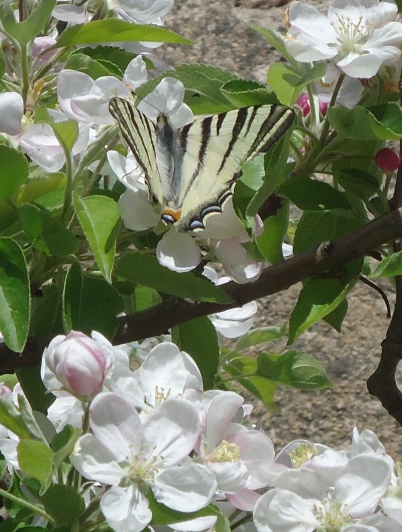Jolis papillons 03717