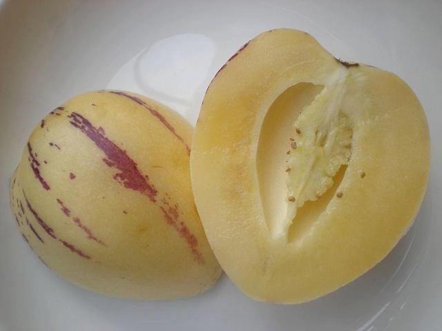arbre a melon:(Solanum muricatum Pepino Gold) 94137010