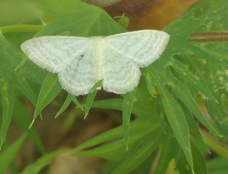 Jolis papillons Papill10
