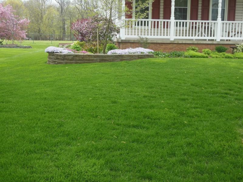 Lawns Dscn6310