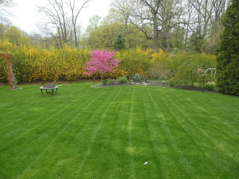 Lawns Dscn6311