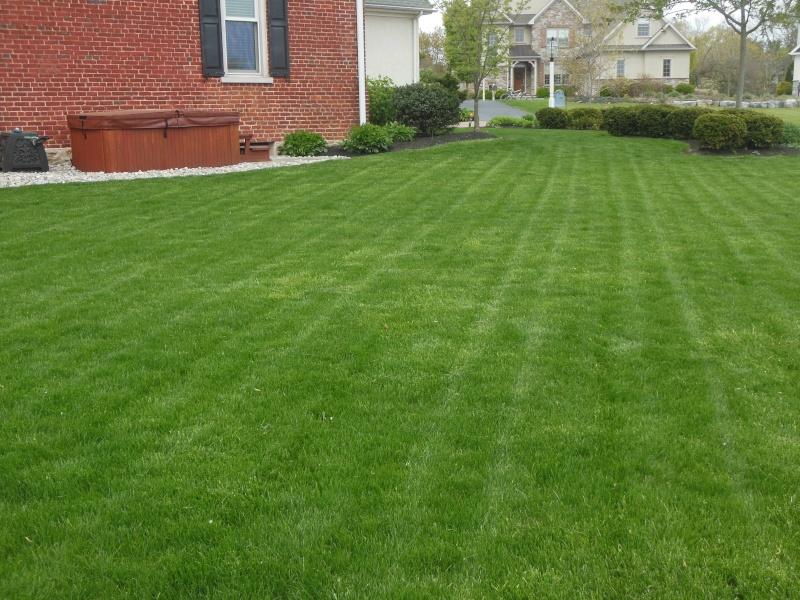 Lawns Dscn6312