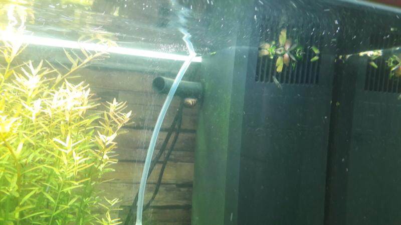 aquarium juwel rio 180 méthode en dry start méthod - Page 3 20200510