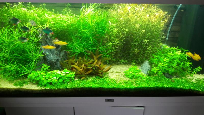 aquarium juwel rio 180 méthode en dry start méthod - Page 3 20200513