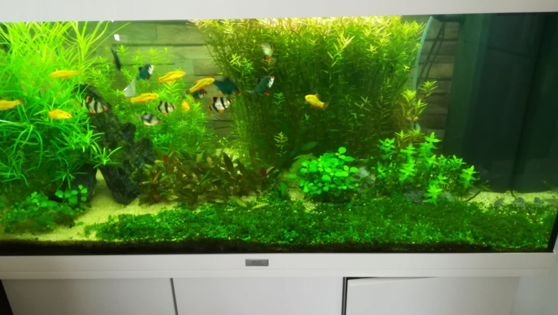 aquarium juwel rio 180 méthode en dry start méthod - Page 4 Aqua_110