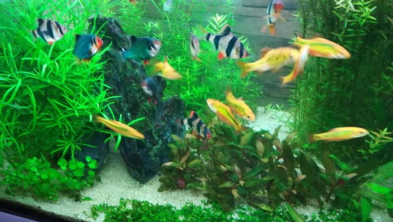 aquarium juwel rio 180 méthode en dry start méthod - Page 4 Aqua_310