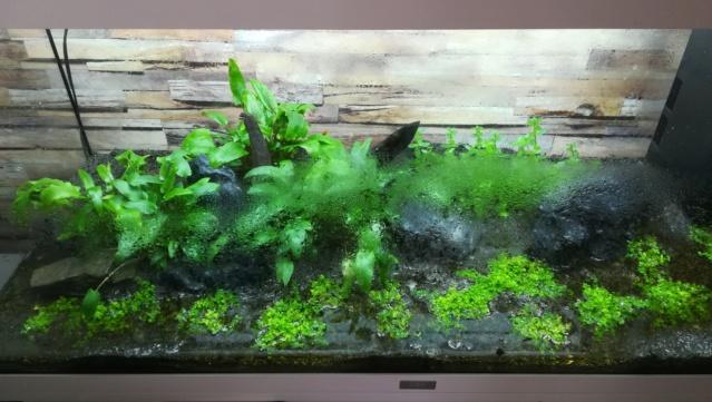 aquarium juwel rio 180 méthode en dry start méthod Img_2014