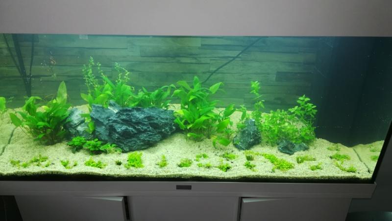 aquarium juwel rio 180 méthode en dry start méthod Img_2018