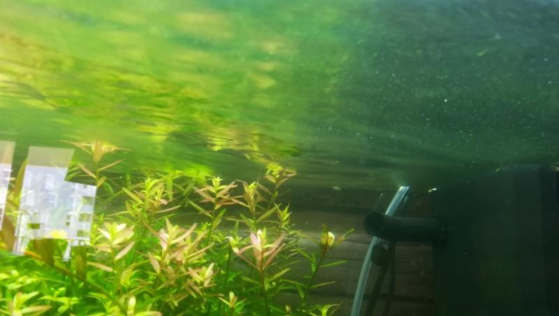 aquarium juwel rio 180 méthode en dry start méthod - Page 3 Img_2035