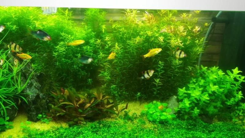 aquarium juwel rio 180 méthode en dry start méthod - Page 3 Img_2036