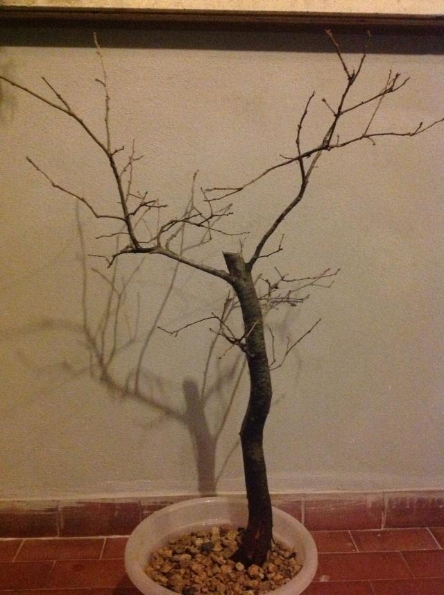 quercia ....... Foto_i18