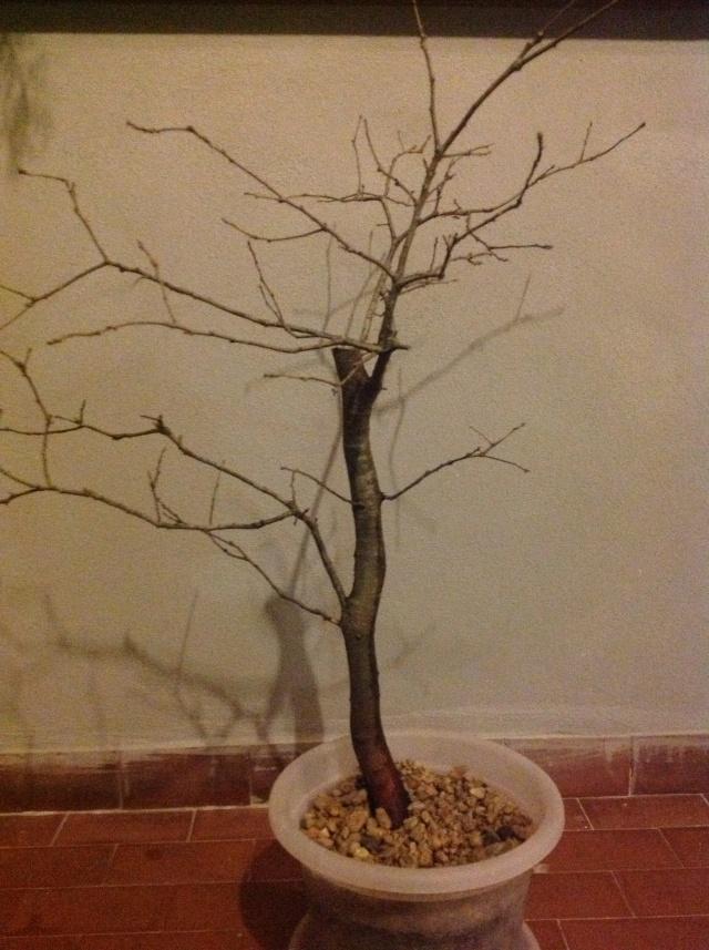 quercia ....... Foto_i19
