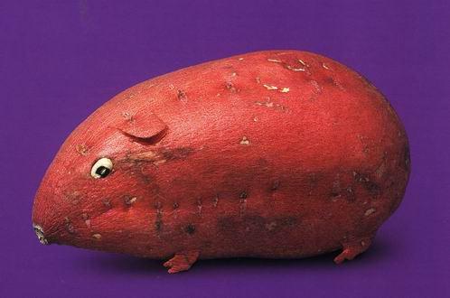 une vie de légume Fruits24